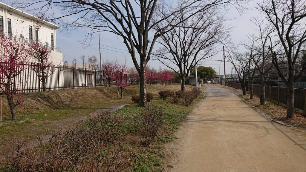 せせらぎ緑地公園 桜堤