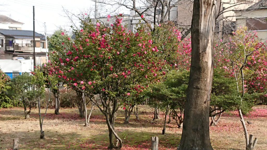 せせらぎ緑地公園の花