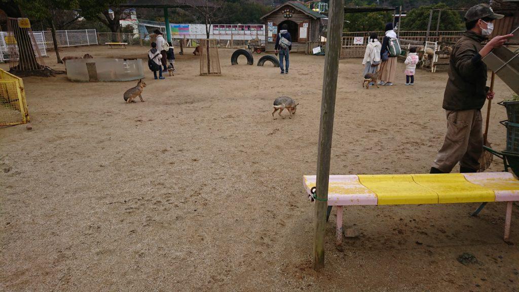 動物ふれあい広場