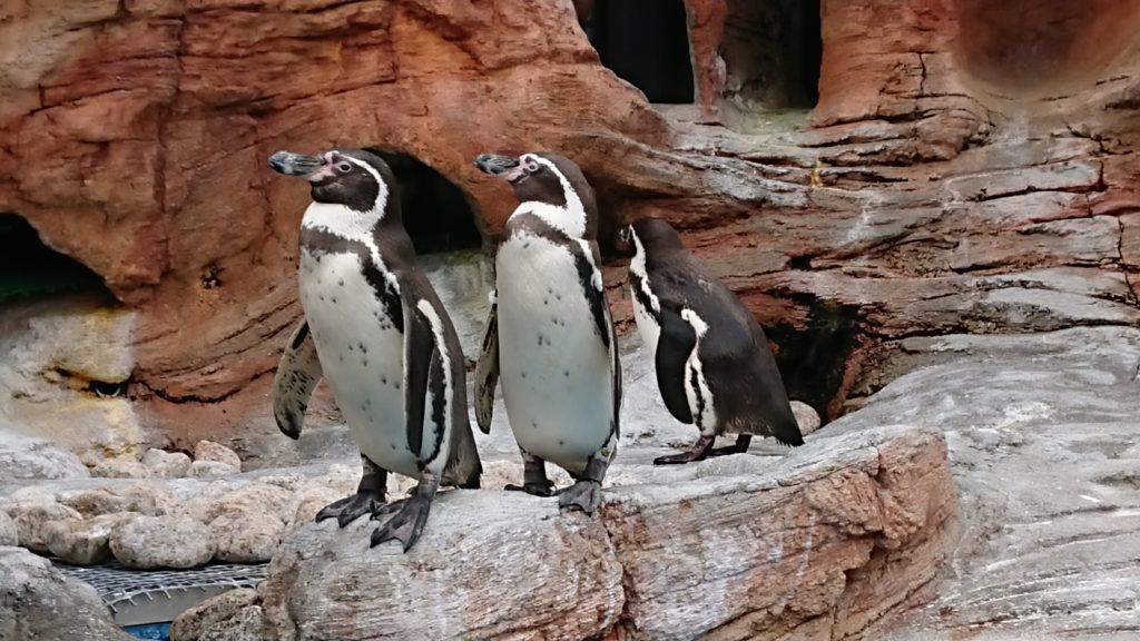 みさき公園のペンギン