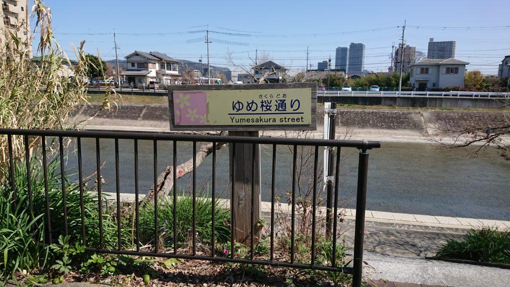 芥川の桜堤公園