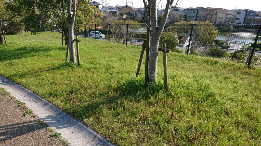 清水池公園 芝生広場
