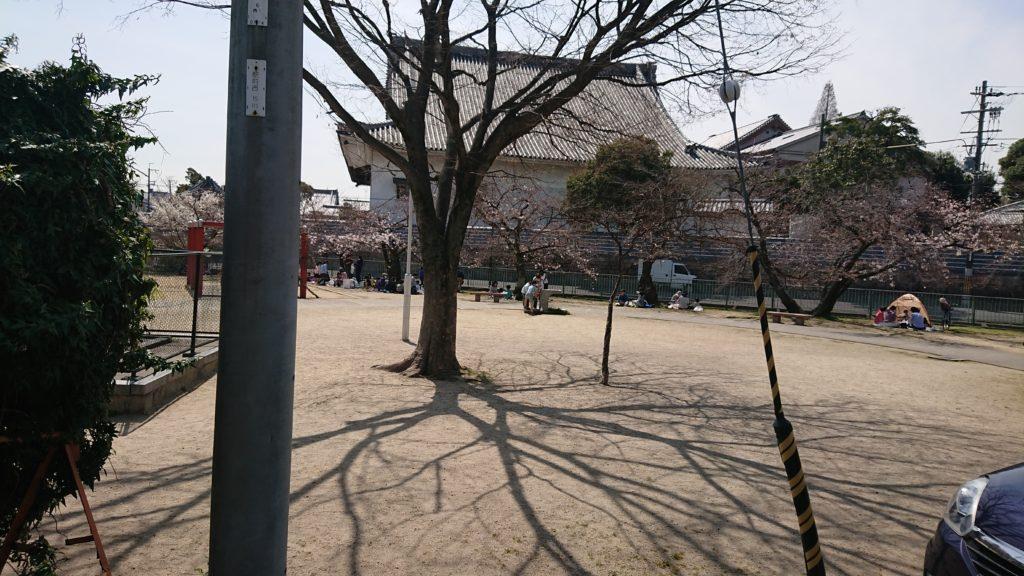 筒井池公園の花見