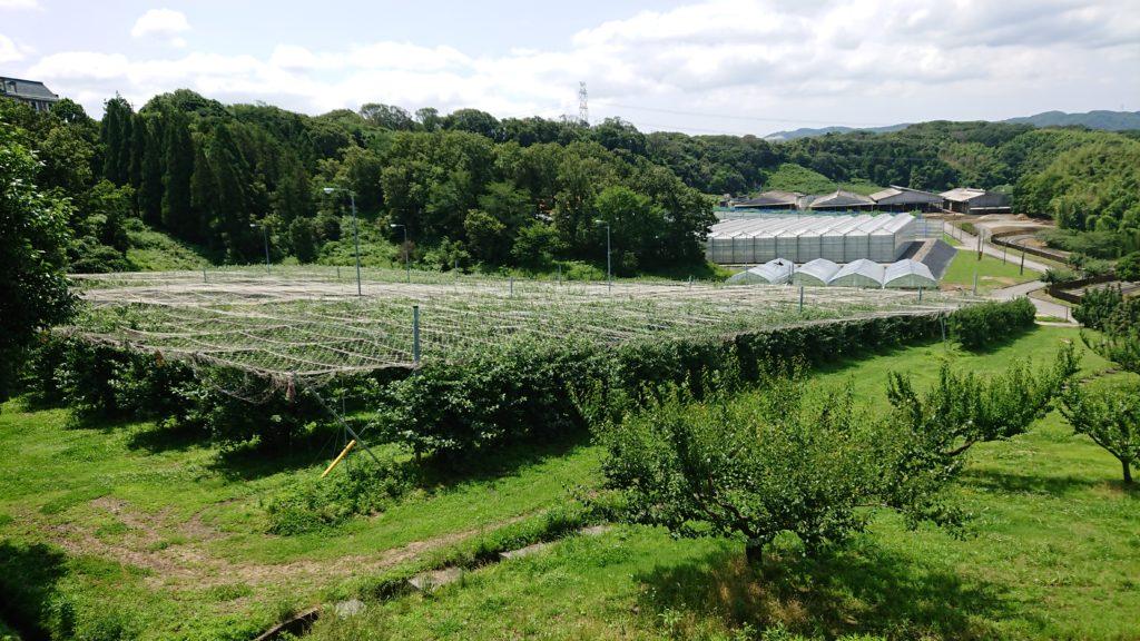 神戸フルーツフラワーパークの果樹園