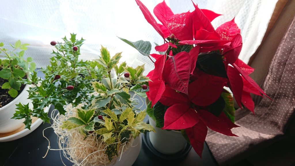 クリスマスの花